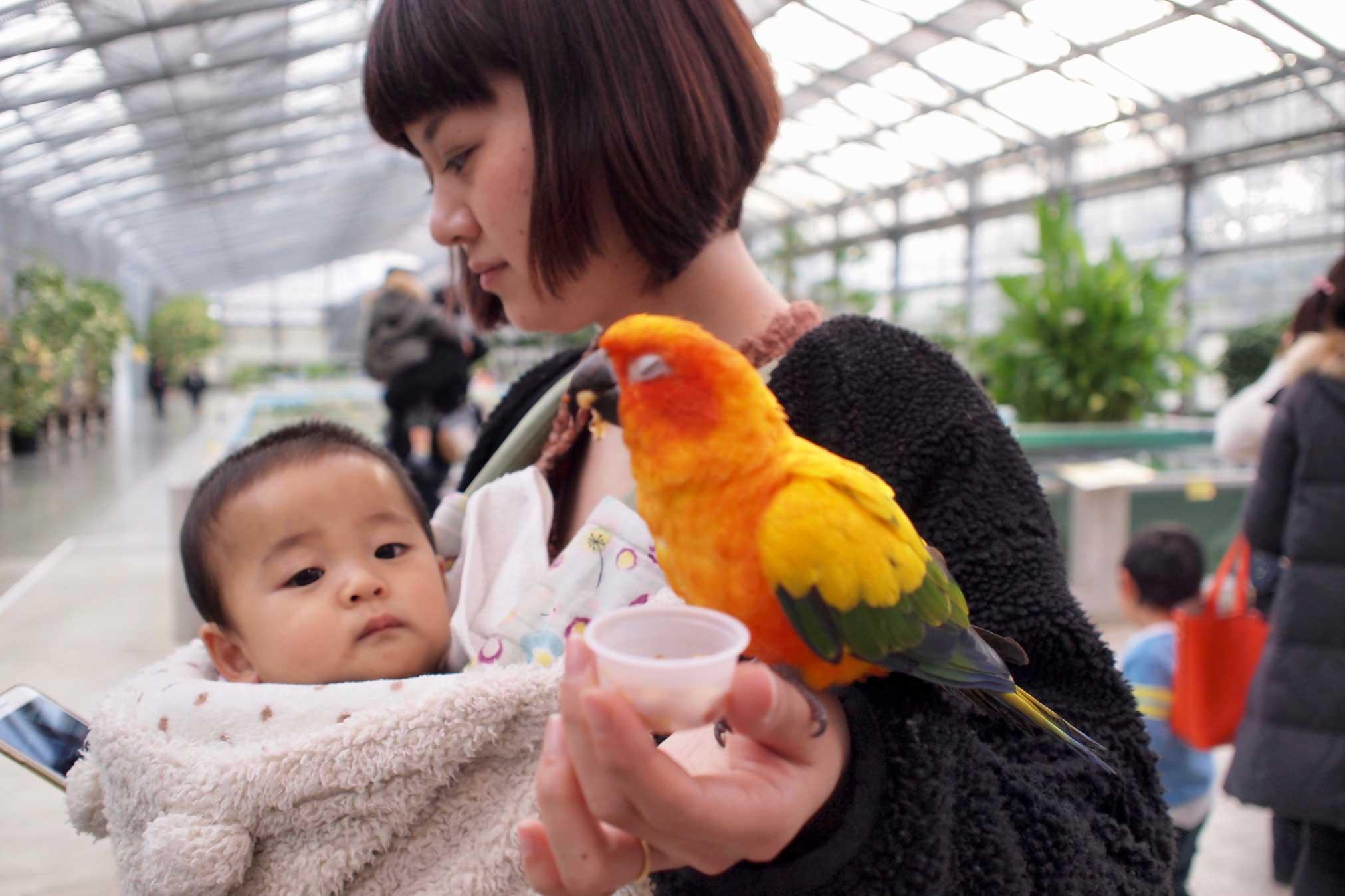 子供,花鳥園,東海ドライブ